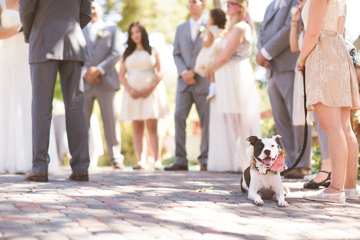 atascadero-wedding-photography-emily-gunn-13_web