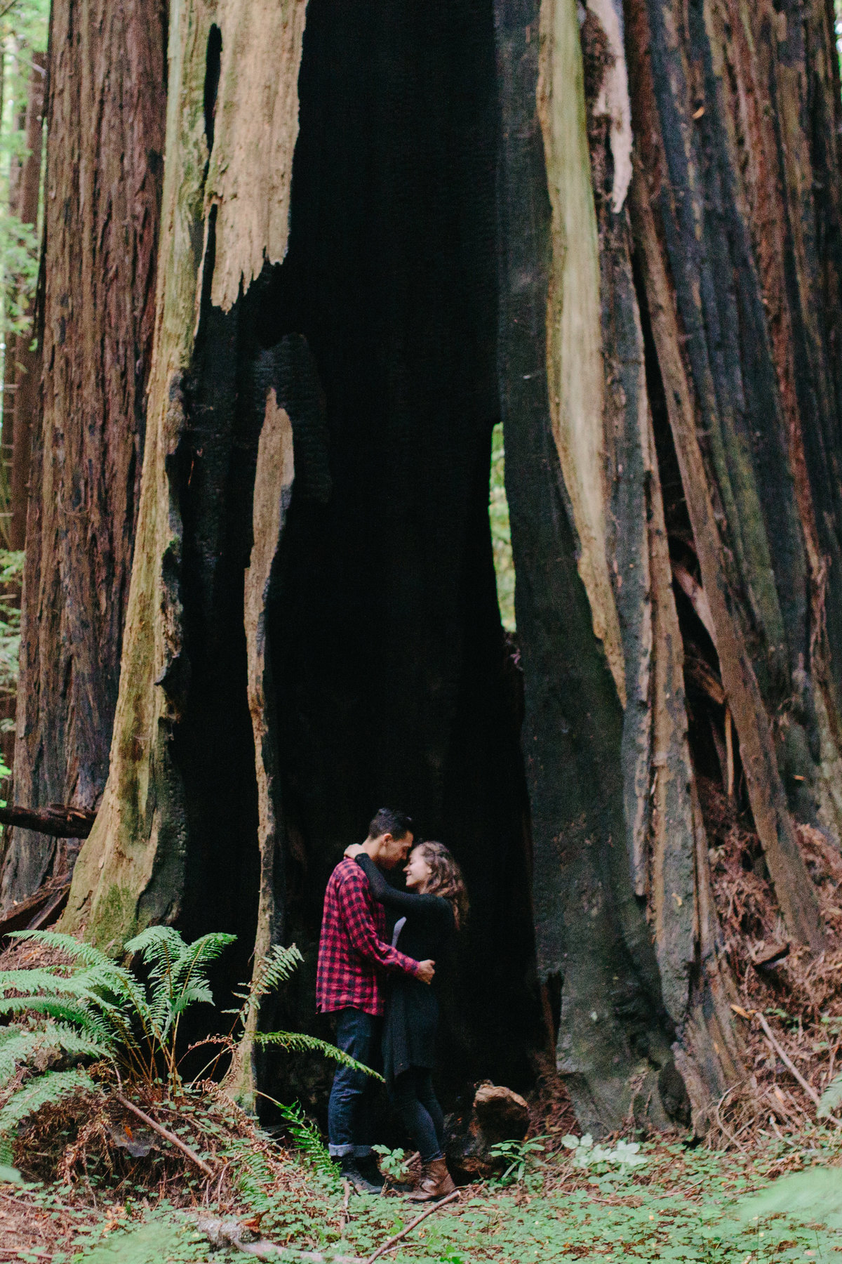 Redwood National Park Avenue of the Giants Engagement Session -7616-2