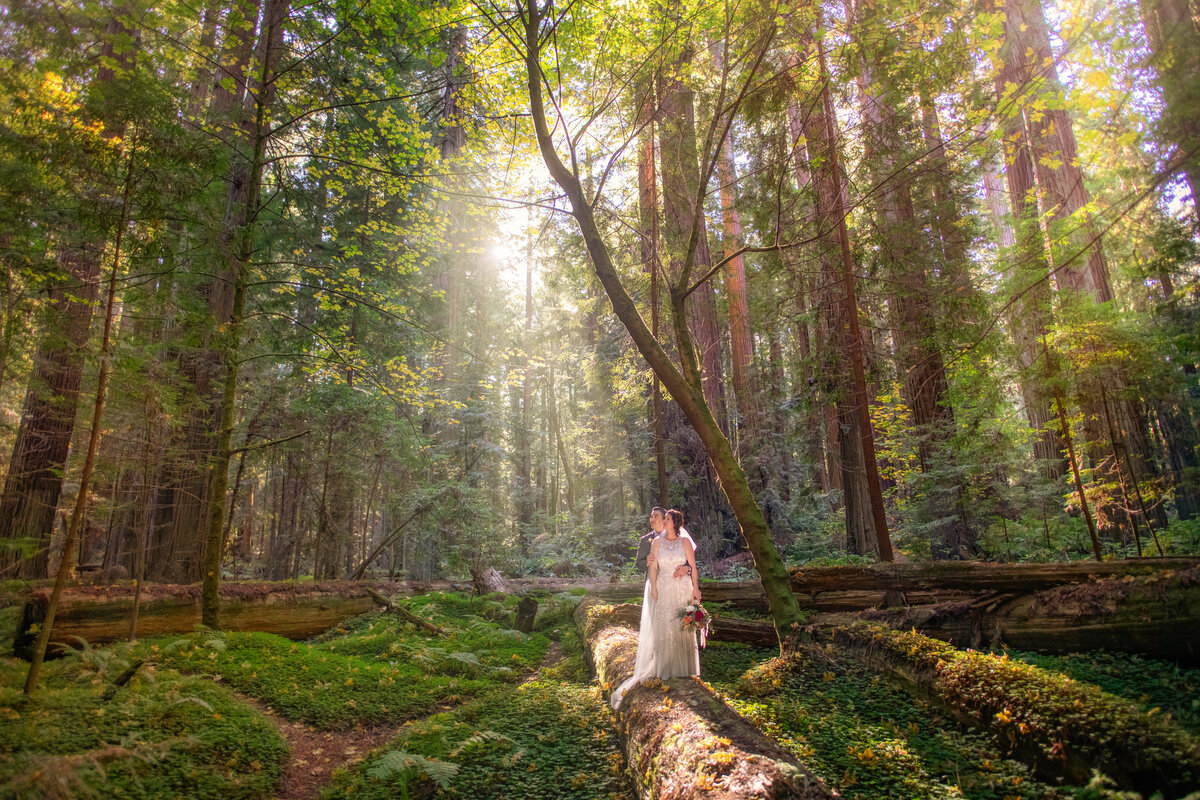 Redway-California-elopement-photographer-Parky's-Pics-Photography-redwoods-elopement-Avenue-of-the-Giants-Pepperwood-California-06.jpg