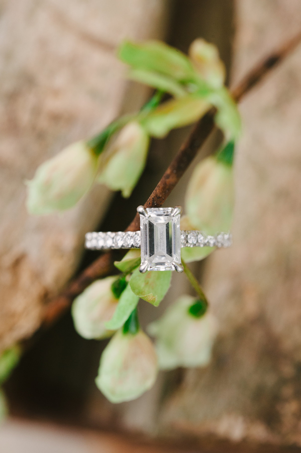 Early Spring Engagement in Atlanta