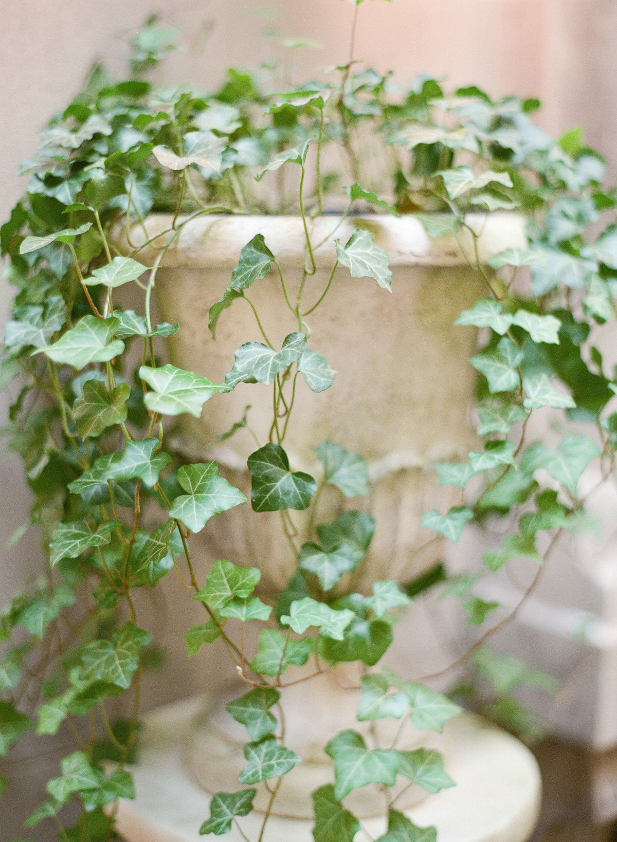 4-KTMerry-wedding-photography-plant-detail