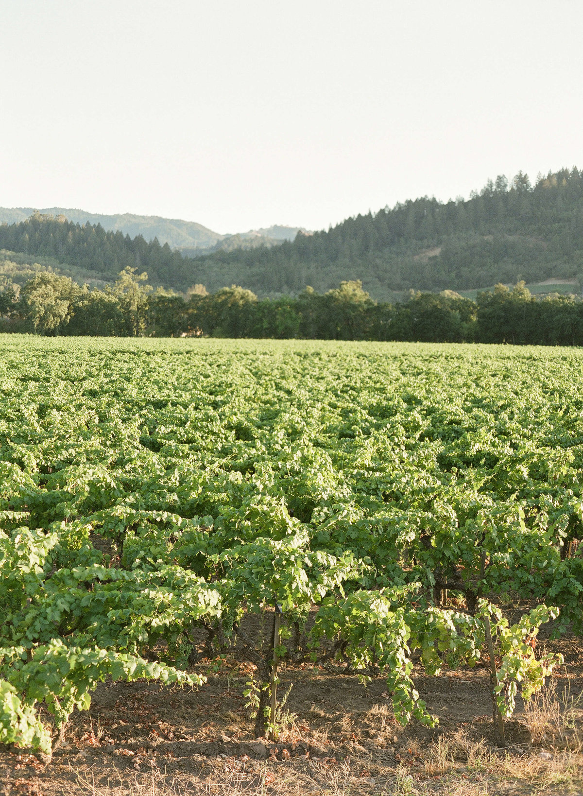2-KTMerry-weddings-vineyards-NapaValley