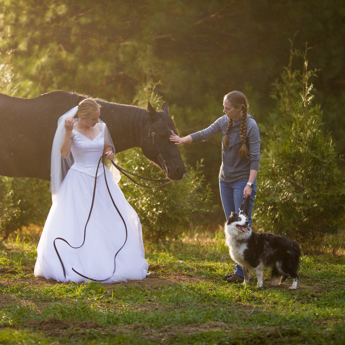 Behind the scenes with bride and her dogs and horse