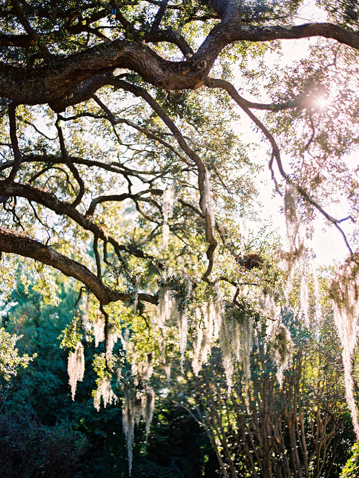wedding-venues-in-charleston-governor-thomas-bennett-house-philip-casey-06