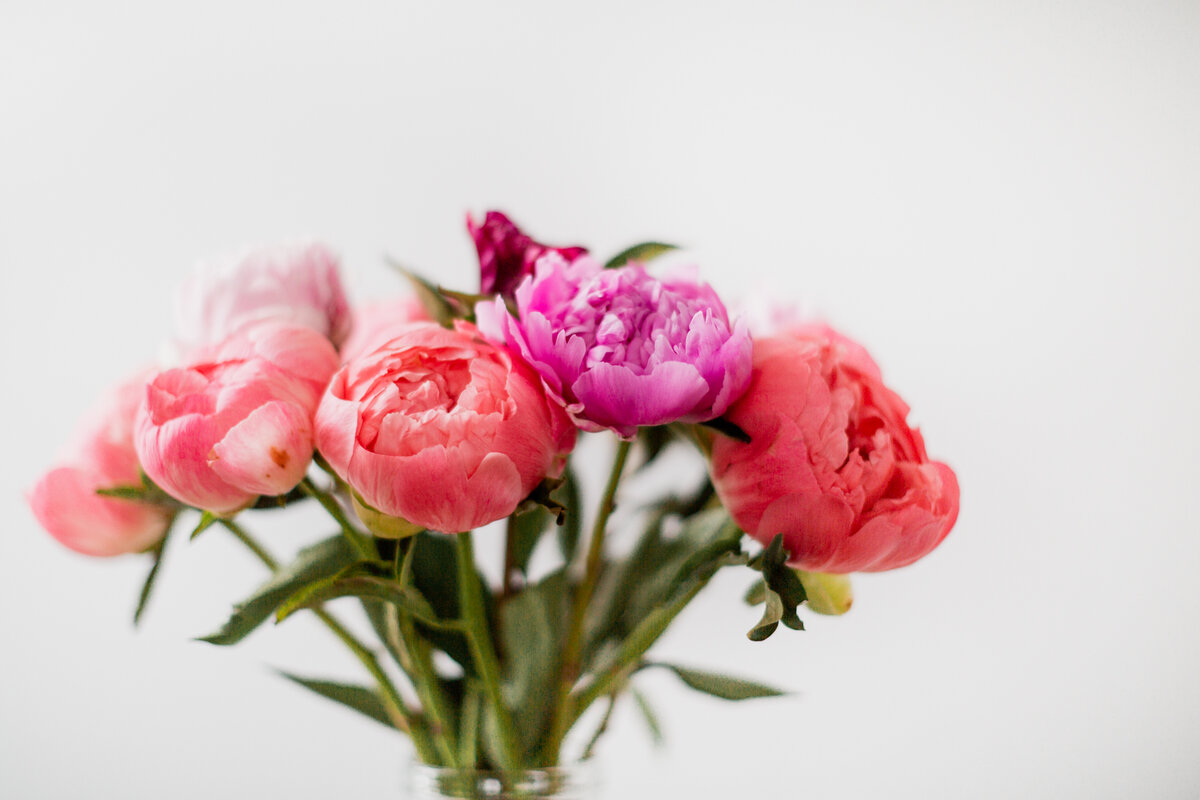 danielle-motif-photography-peonies-1