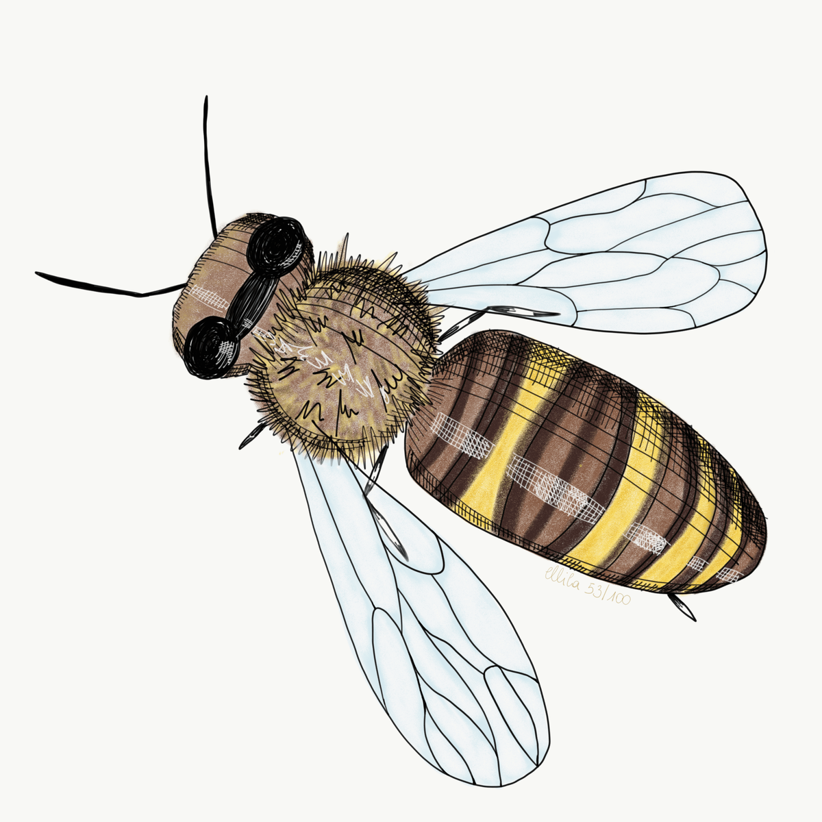 bee illustration ellila designs