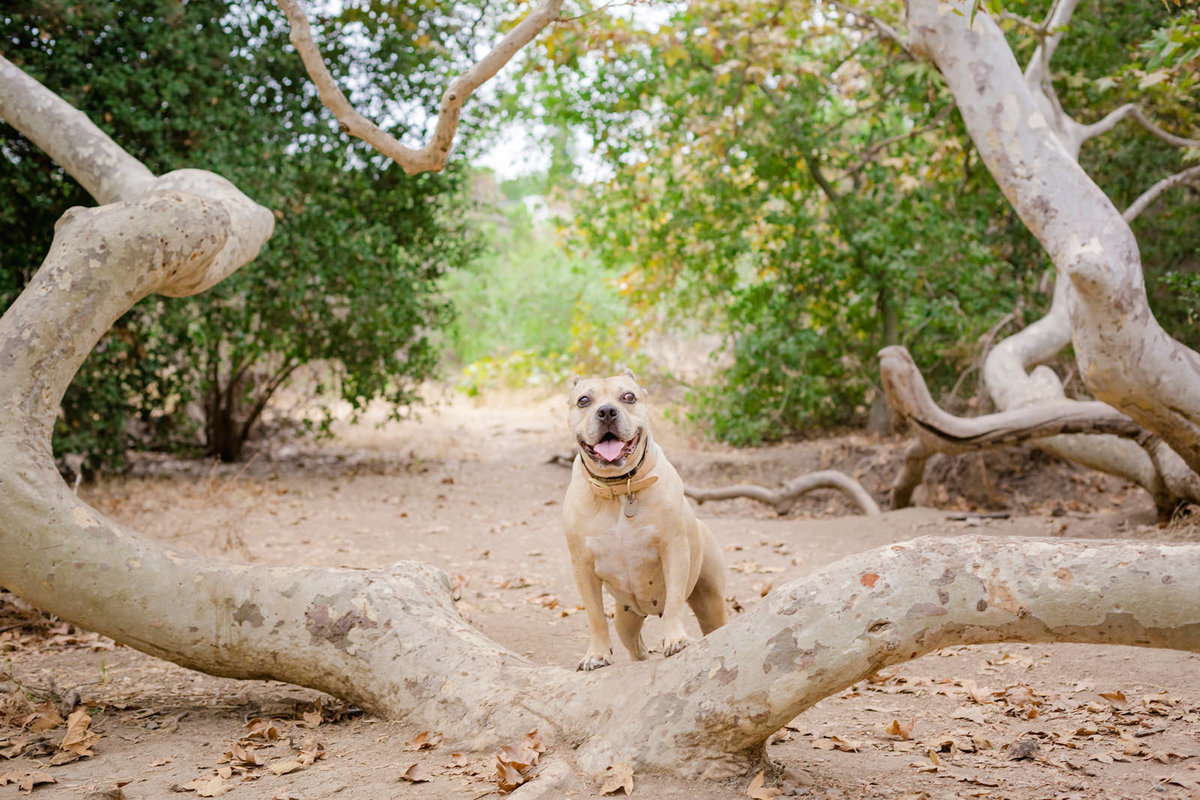 San-Diego-Pet-Family-Photographer-Ali-Peterson-Photography_0022