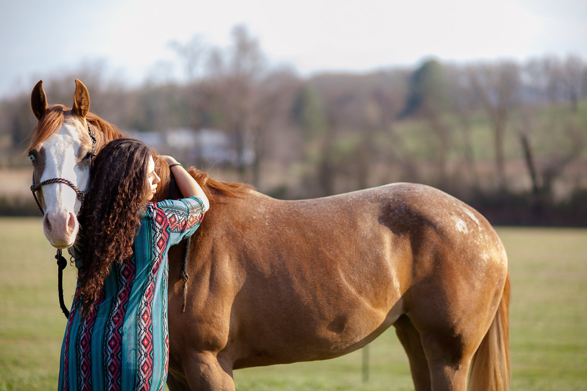 North Carolina Equine Photographer Laze L Farm Photography