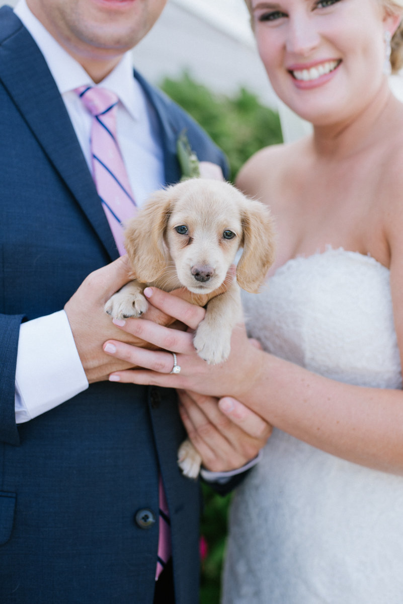 puppy as a wedding gift at Bonnet island Estate