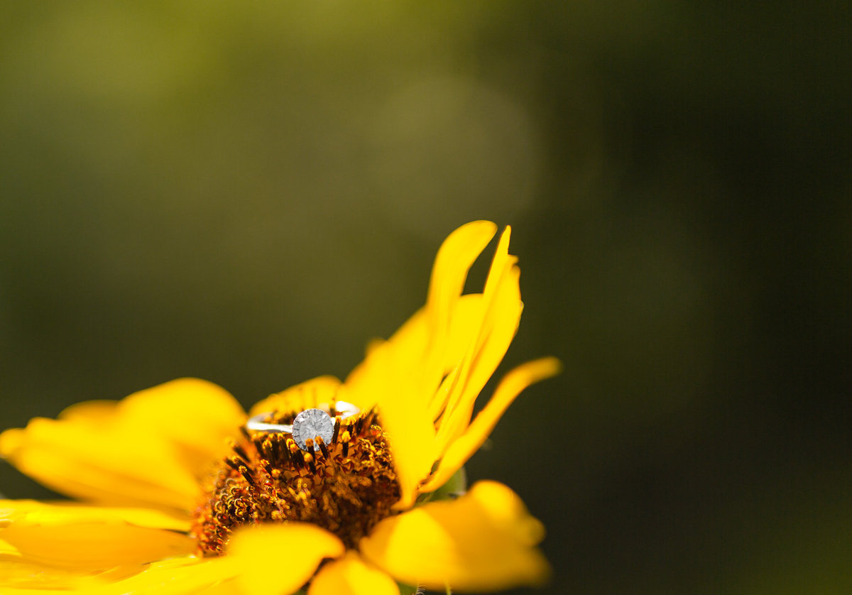 Sunflower Engagement Session0006