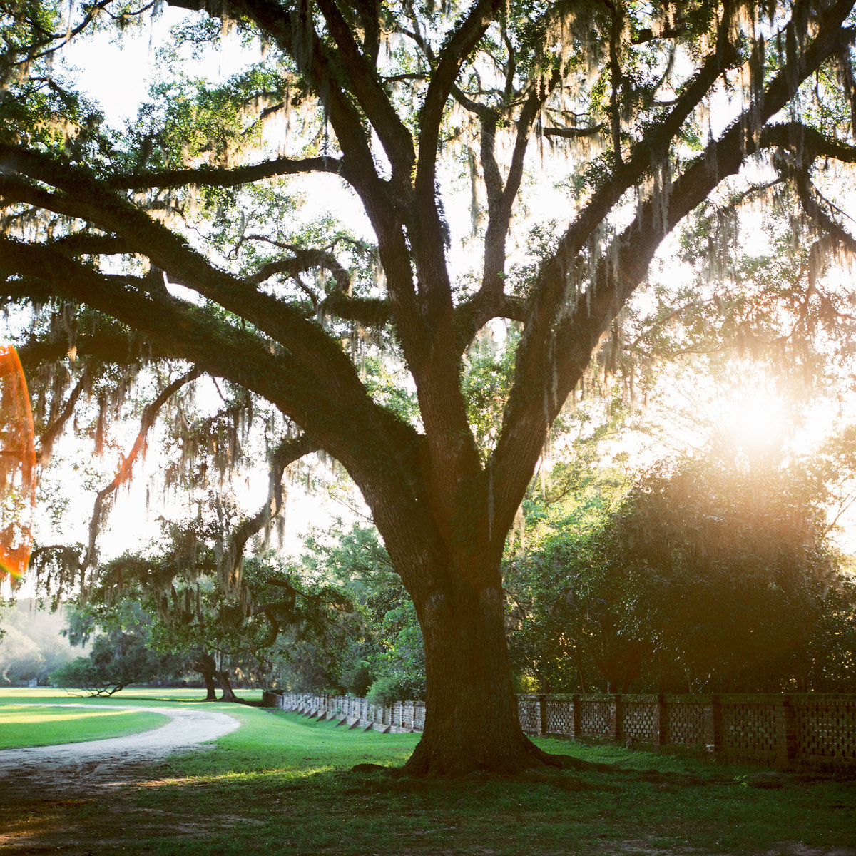 charleston-wedding-venues-middleton-place-philip-casey-photography-050