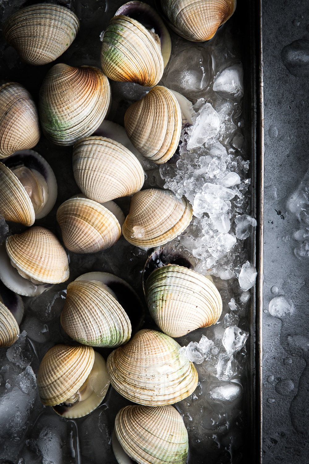 Clams - Anisa Sabet - Food Photographer