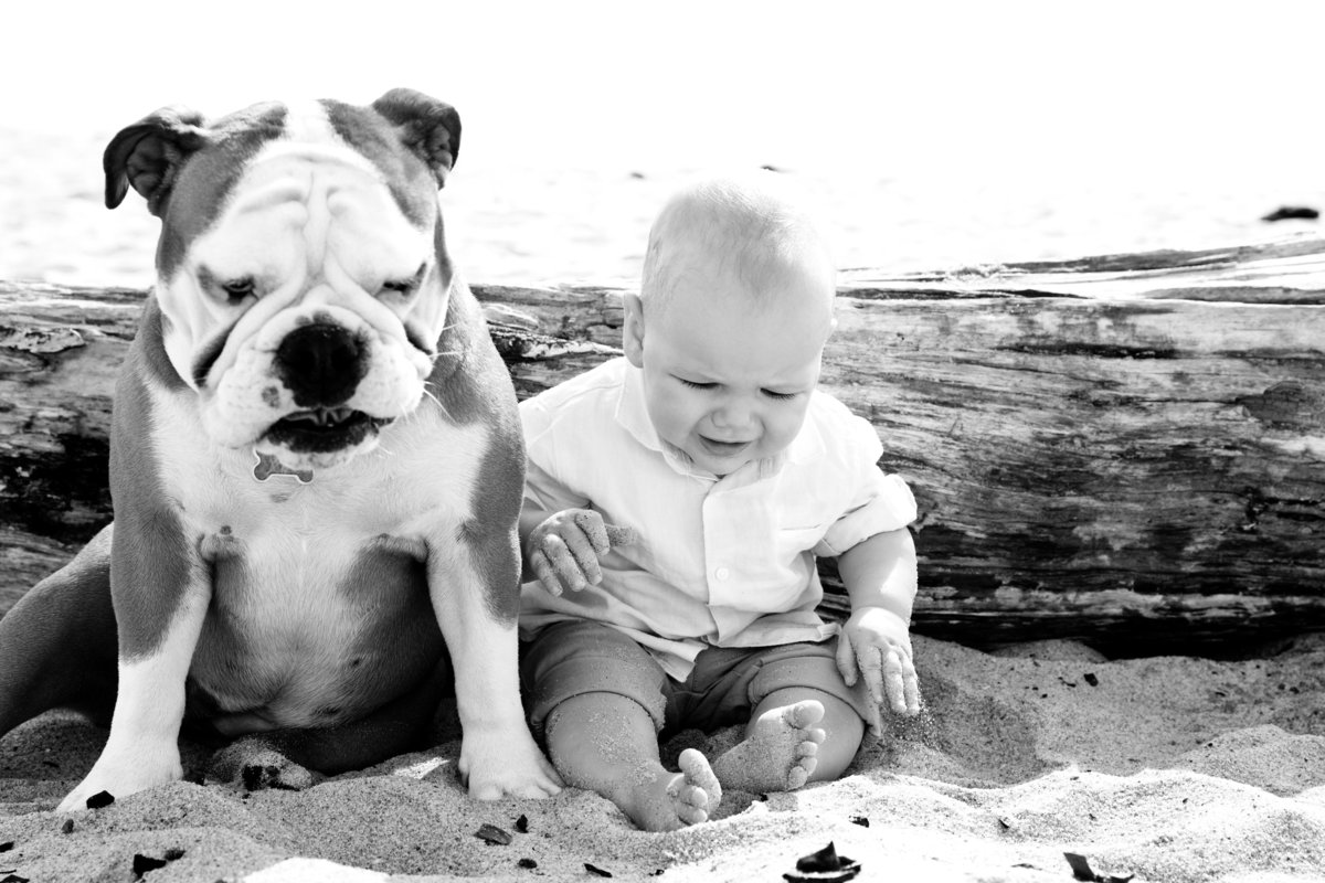 Baby sitting on beach with pet bulldog