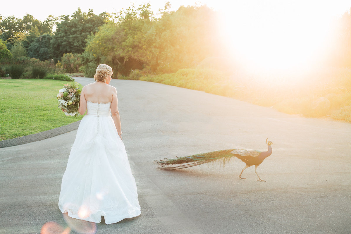 2017.los-angles-arboredum-texas-wedding-photographer-2