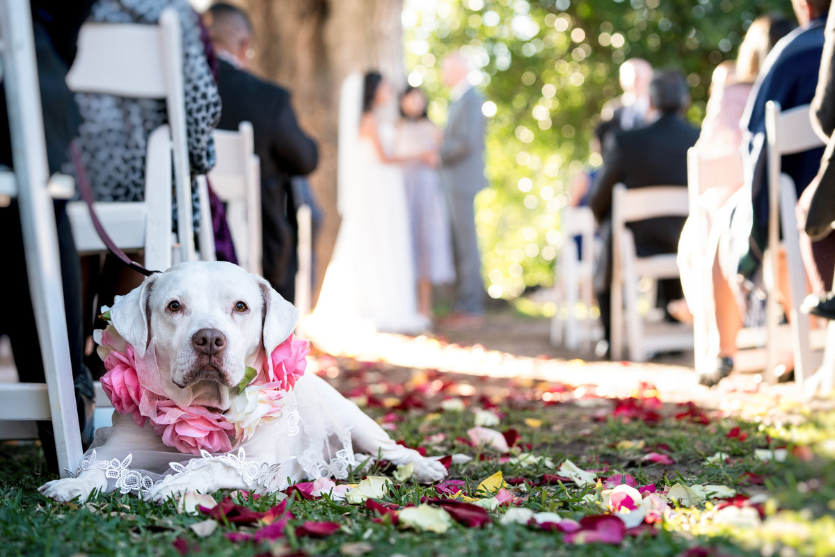 austin wedding photographer dog ring bearer 2211 Hairy Man Rd, Round Rock, TX 78681
