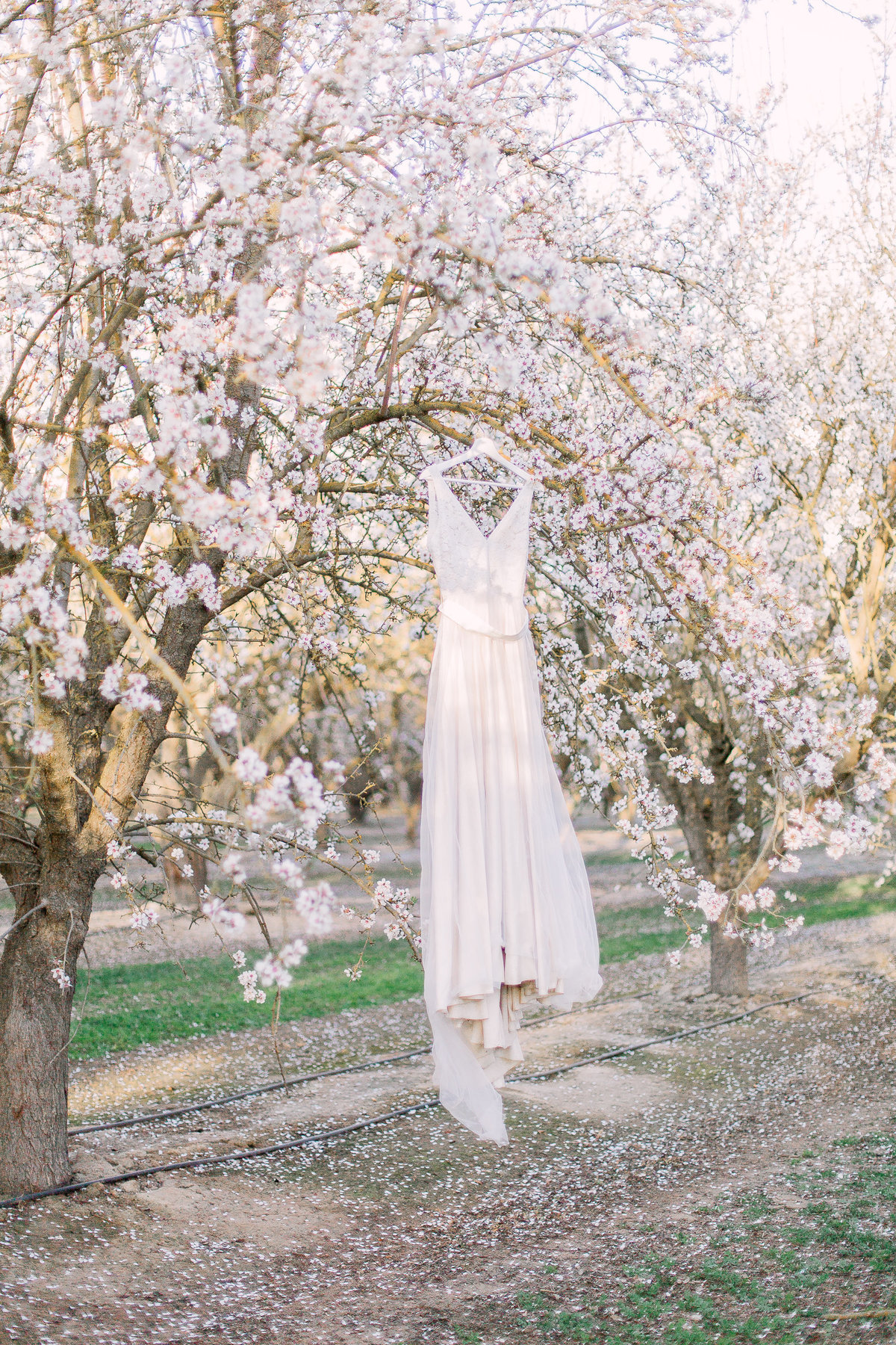 Romantic Orchard Elopement-4