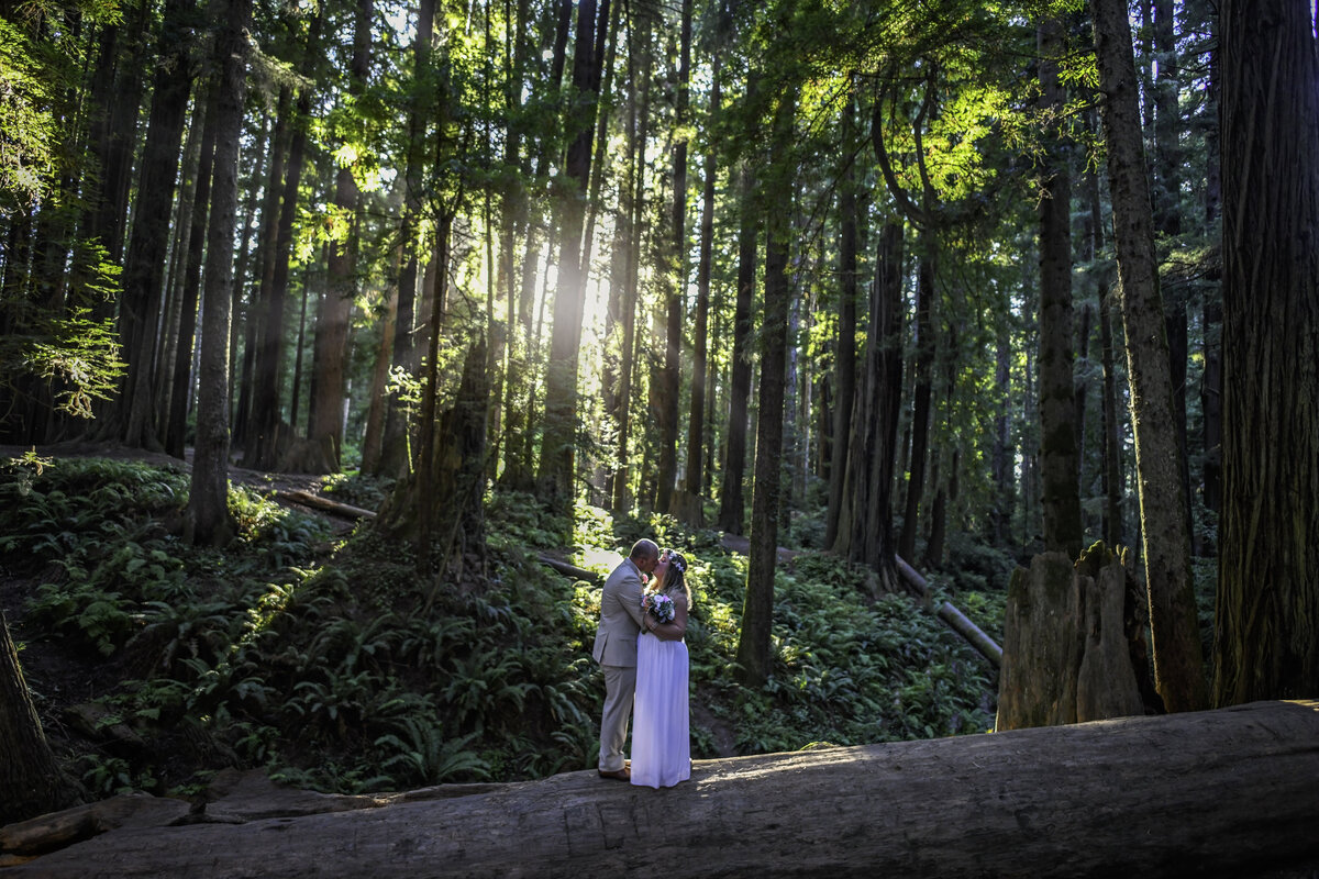 Redway-California-elopement-photographer-Parky's-Pics-Photography-redwoods-elopement-Sequoia-Park-Eureka-California-01