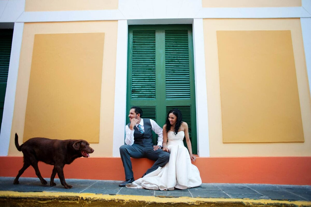 a bride and groom sit on a colorful wall in puerto rico as a chocolate lab walks by