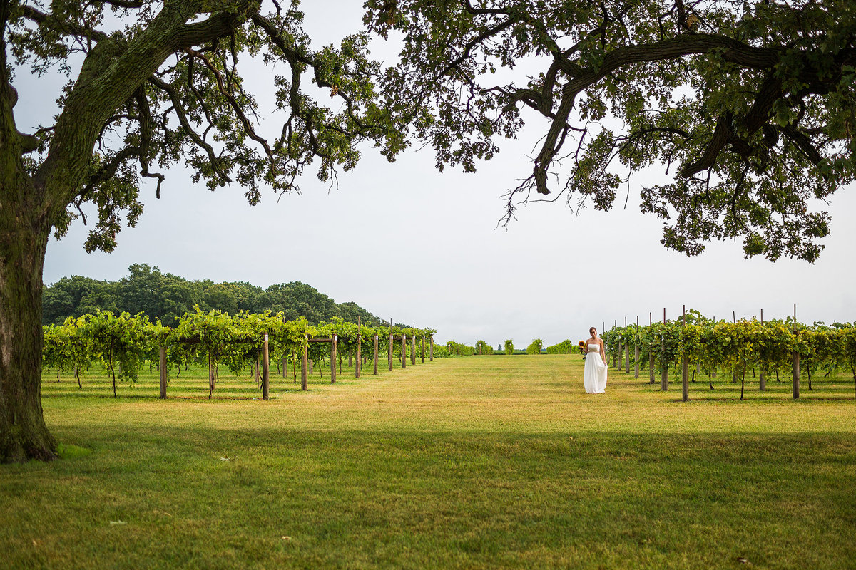 bride walking through vineyard at mceachran winery in caledonia illinois