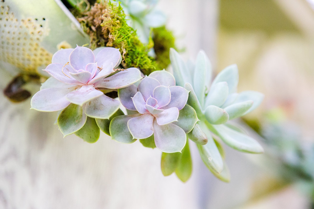 Austin Family Photographer, Tiffany Chapman Photography succulent landscaping photo