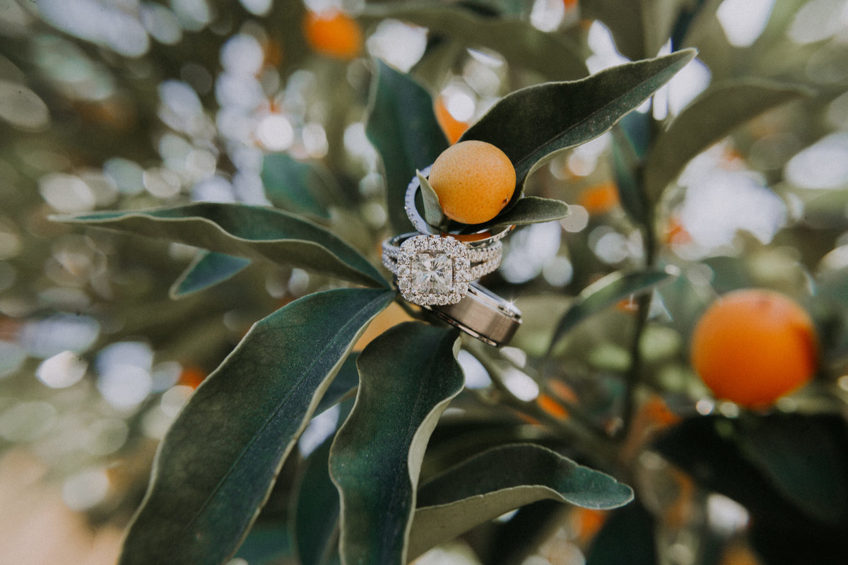 Callaway winery wedding pictures rings hang from orange tree