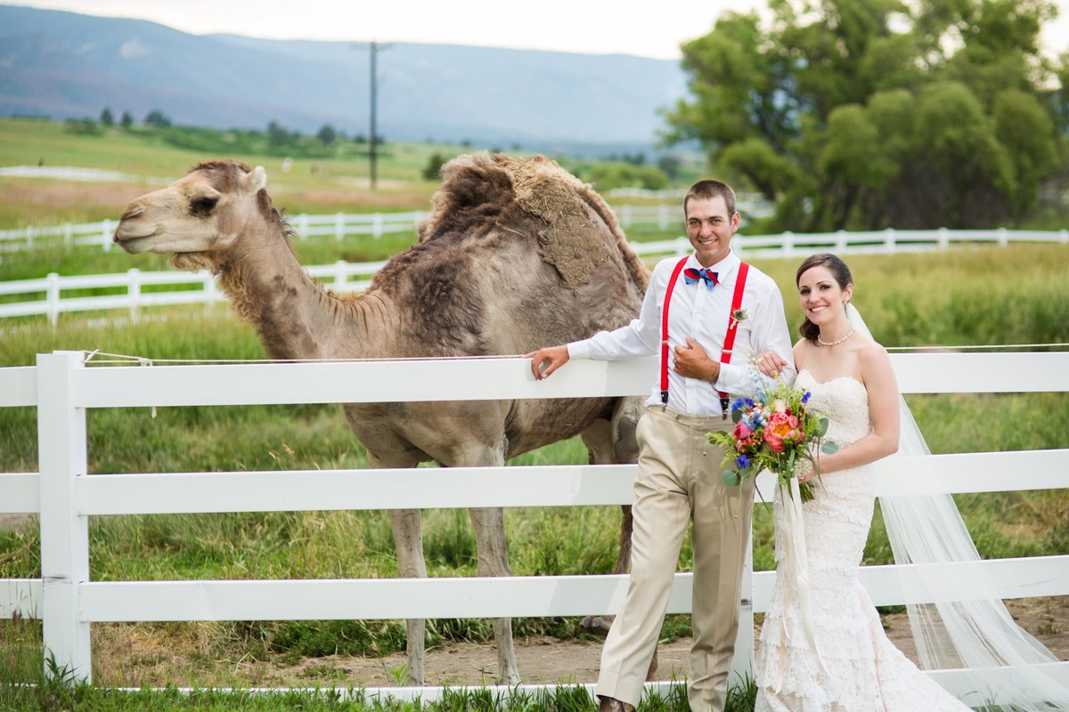 Bride and Groom with camels at Crooked Willow