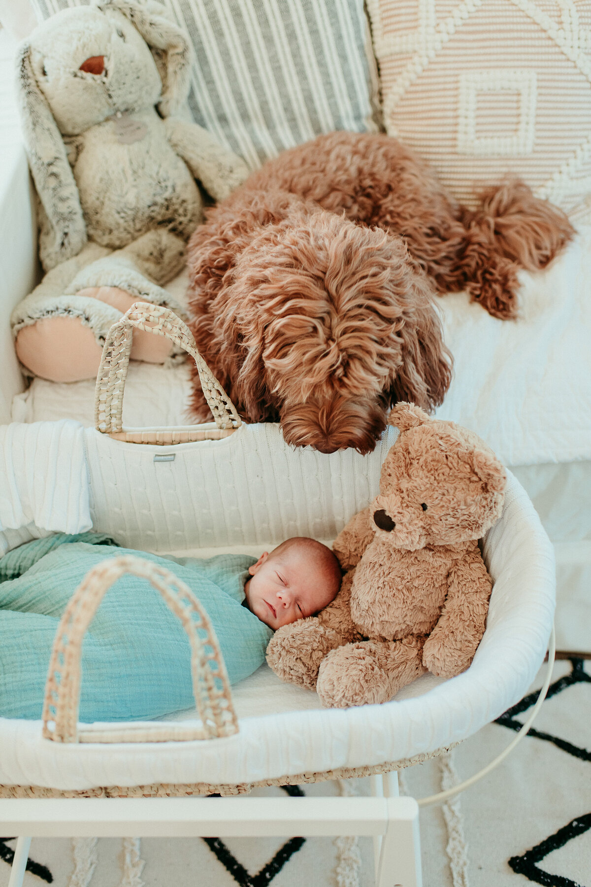 Carlsbad Newborn Photographer Dog-brother-61