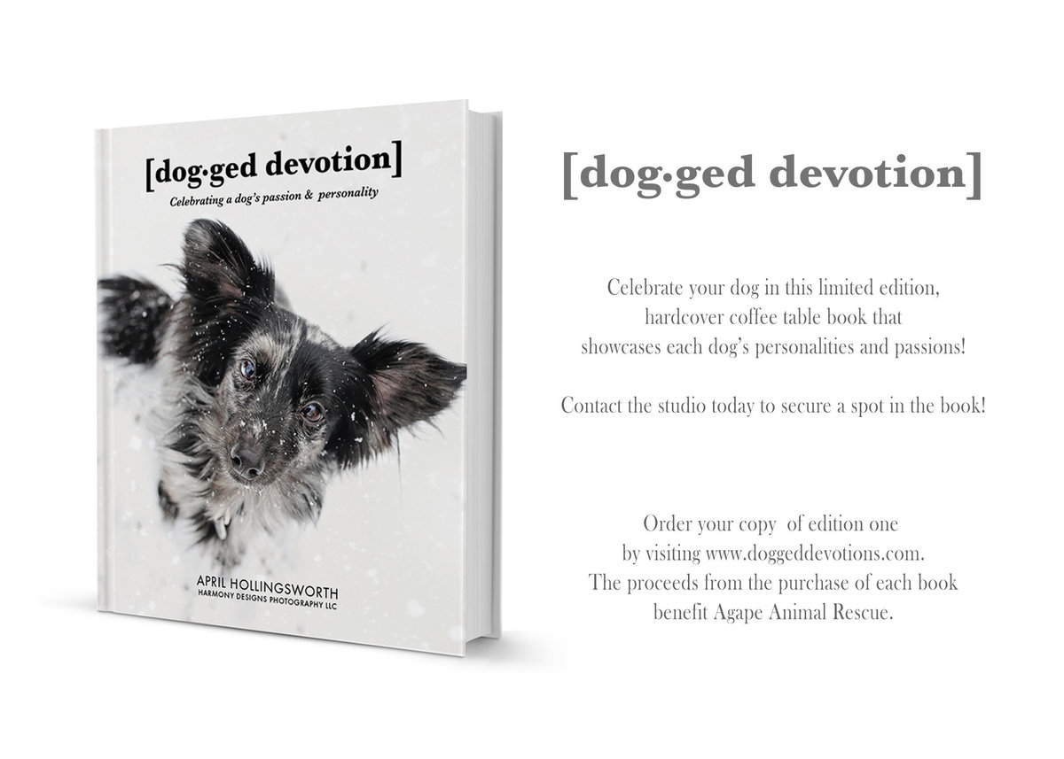 Dog-ged Devotion dog coffee table book