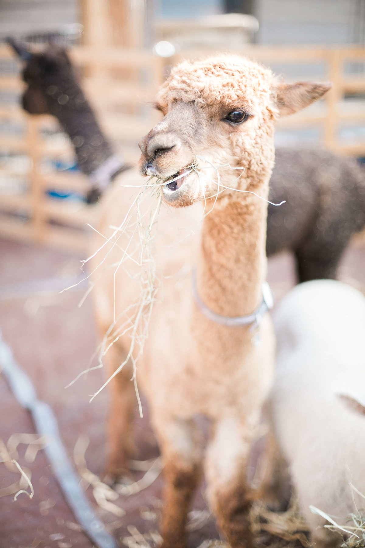 MaraeEvents-BlueSkyRanch-GabriellaSantosPhotography-65