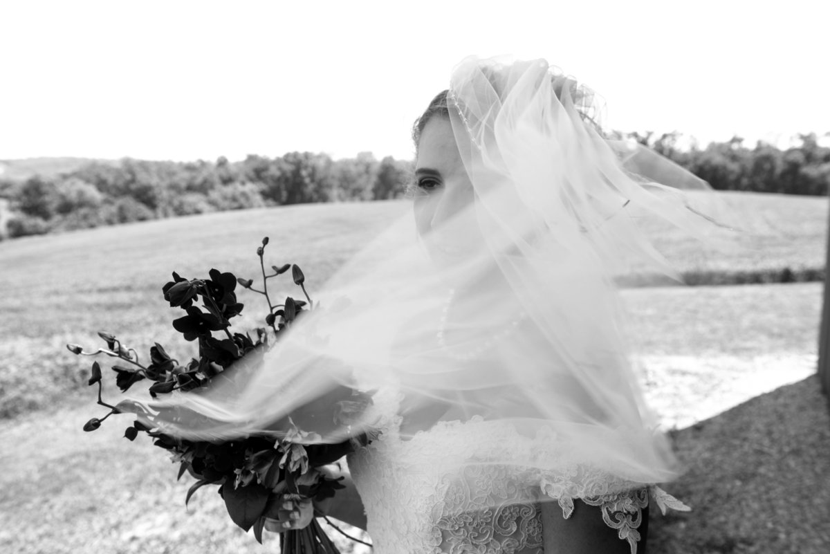wind sweeps brides veil