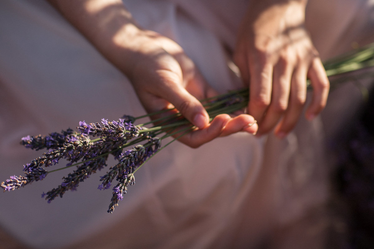 detailphoto with lavender during golden hour