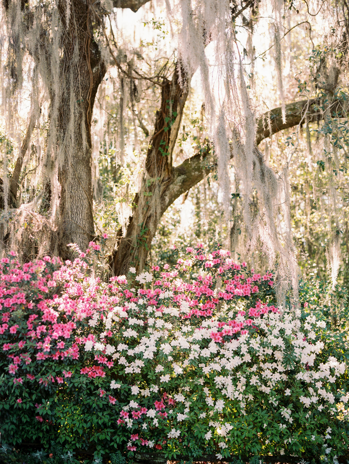 charleston-wedding-venues-magnolia-plantation-philip-casey-photography-006