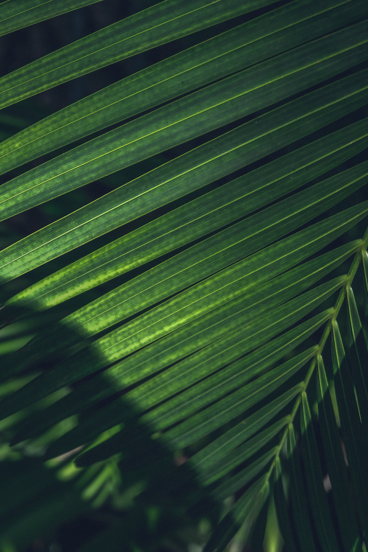 haute-stock-photography-tropical-vibes-final-17