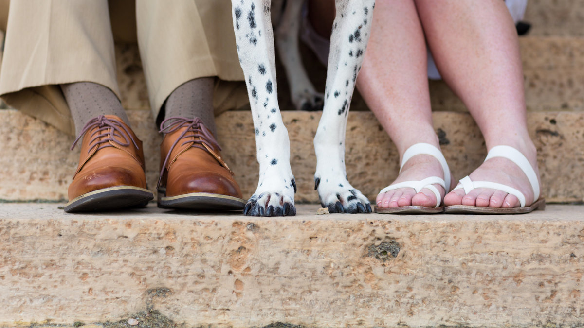 Engagement session with dog just the feet