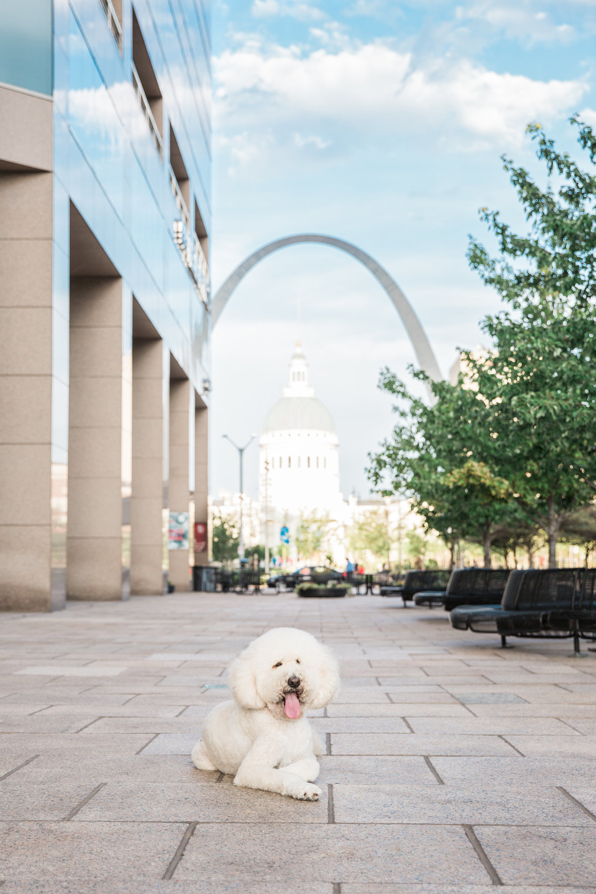 St. Louis Pet Photographer