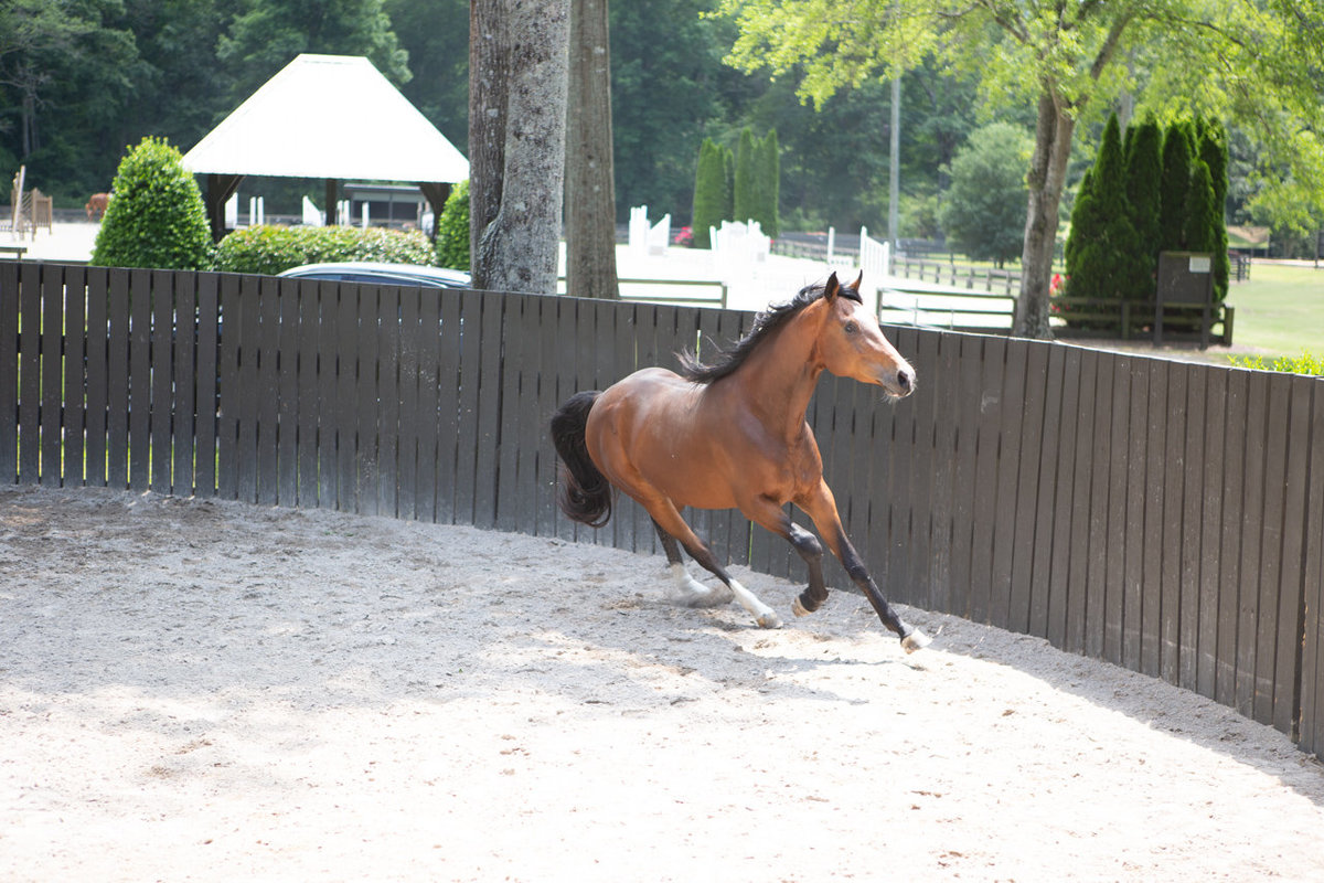 Windwood_Equestrian_Corporate_Events_Alabama_Equine_team_Building_29