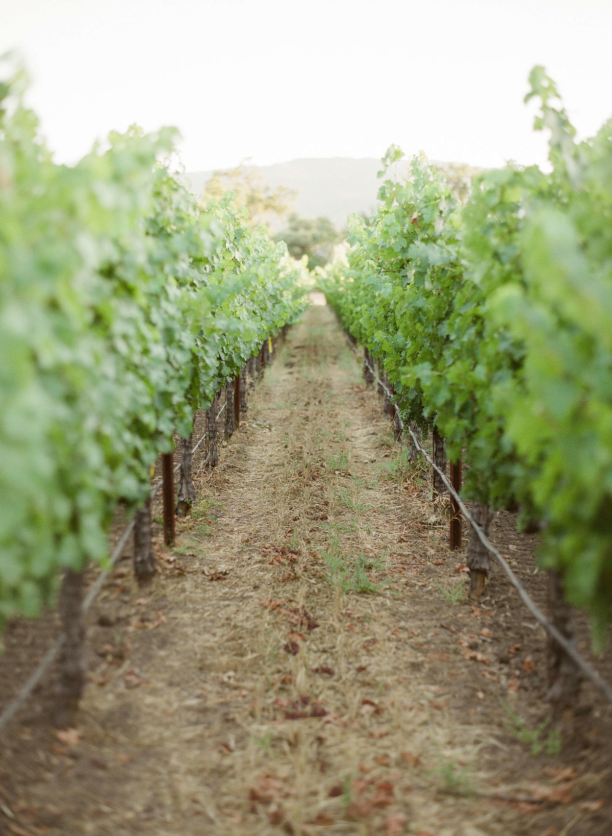 1-KTMerry-wedding-photography-NapaValley-vineyard