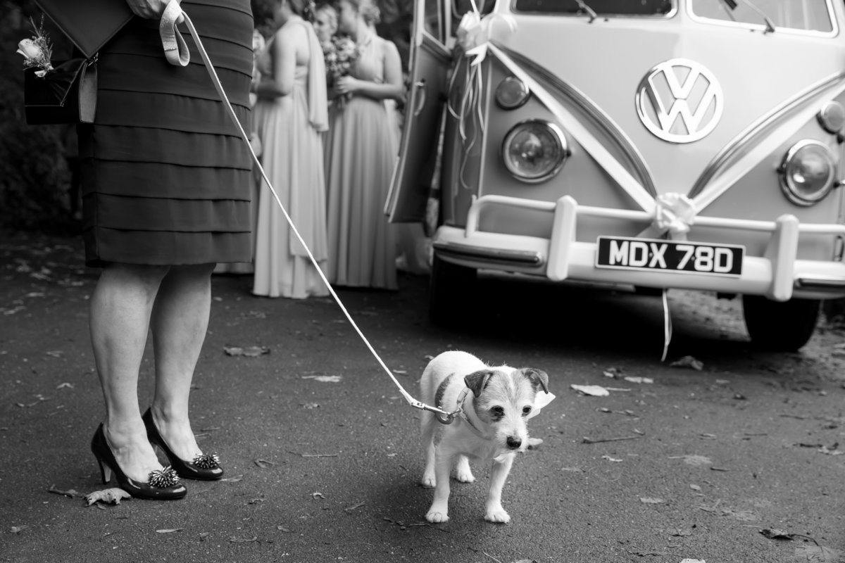 dog and campervan devon wedding photo