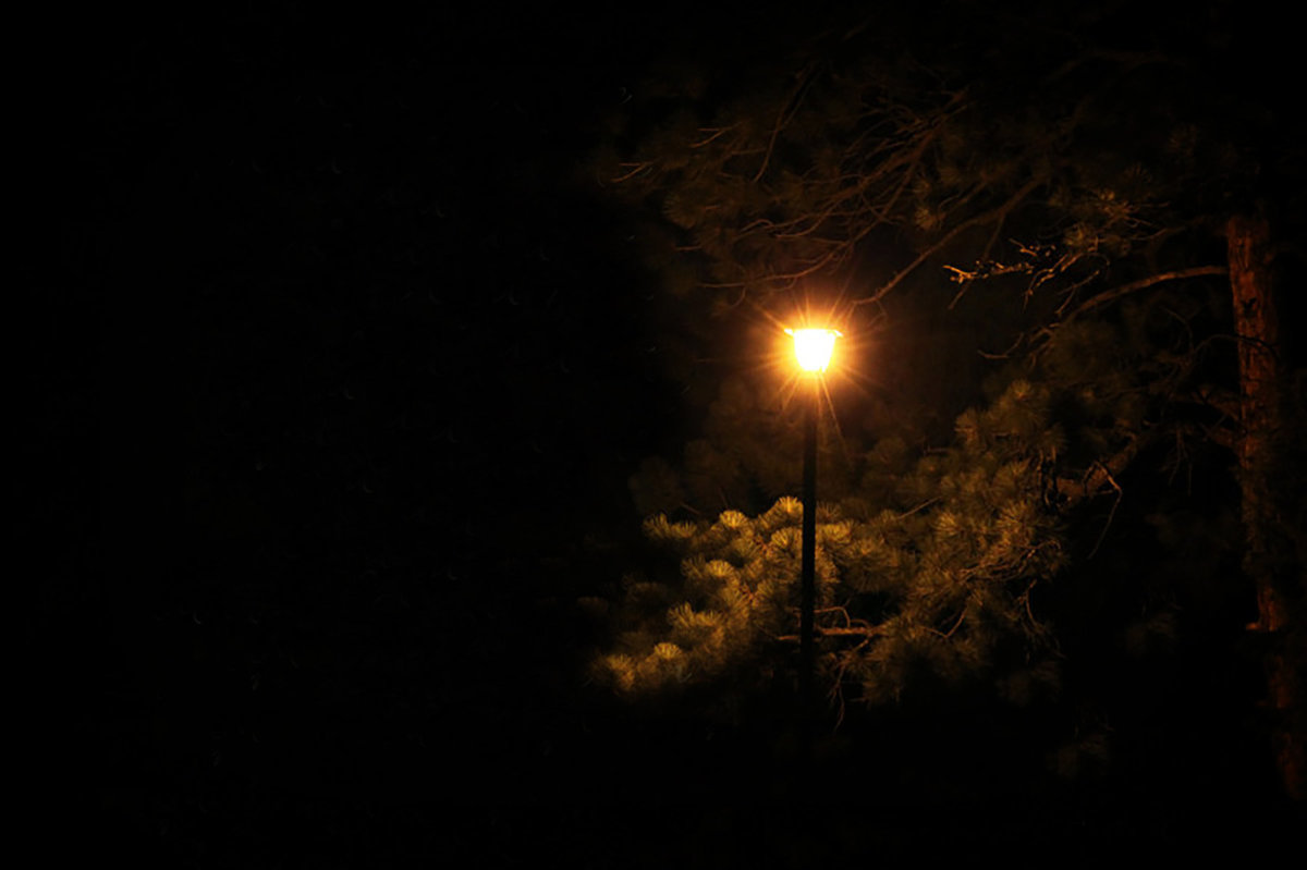 Lamplight-in-the-Woods 1