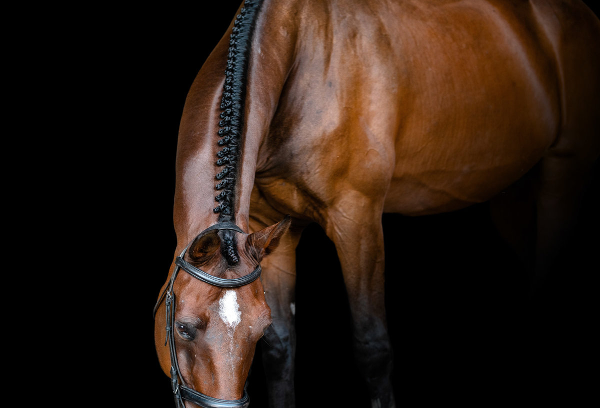 Fine art equine photography in North Florida