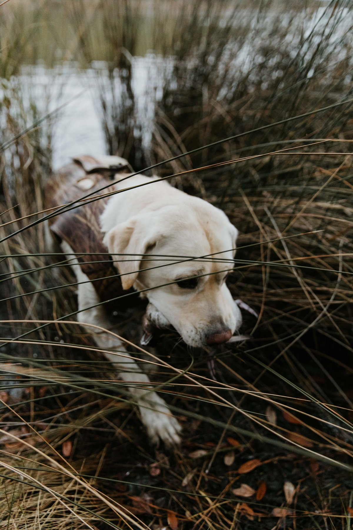 Charleston-sc-duck-hunting-lifestyle-photography-2