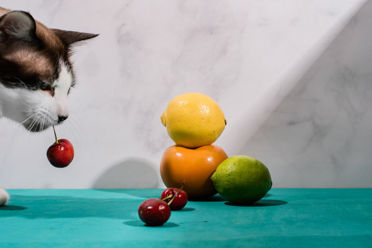 still life with cat and fruit