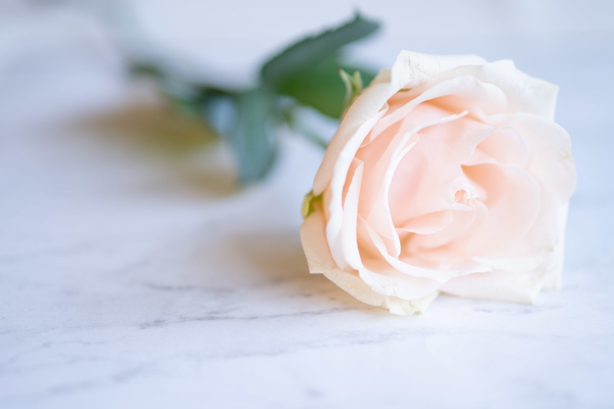 Light Pink rose lying a marble counter