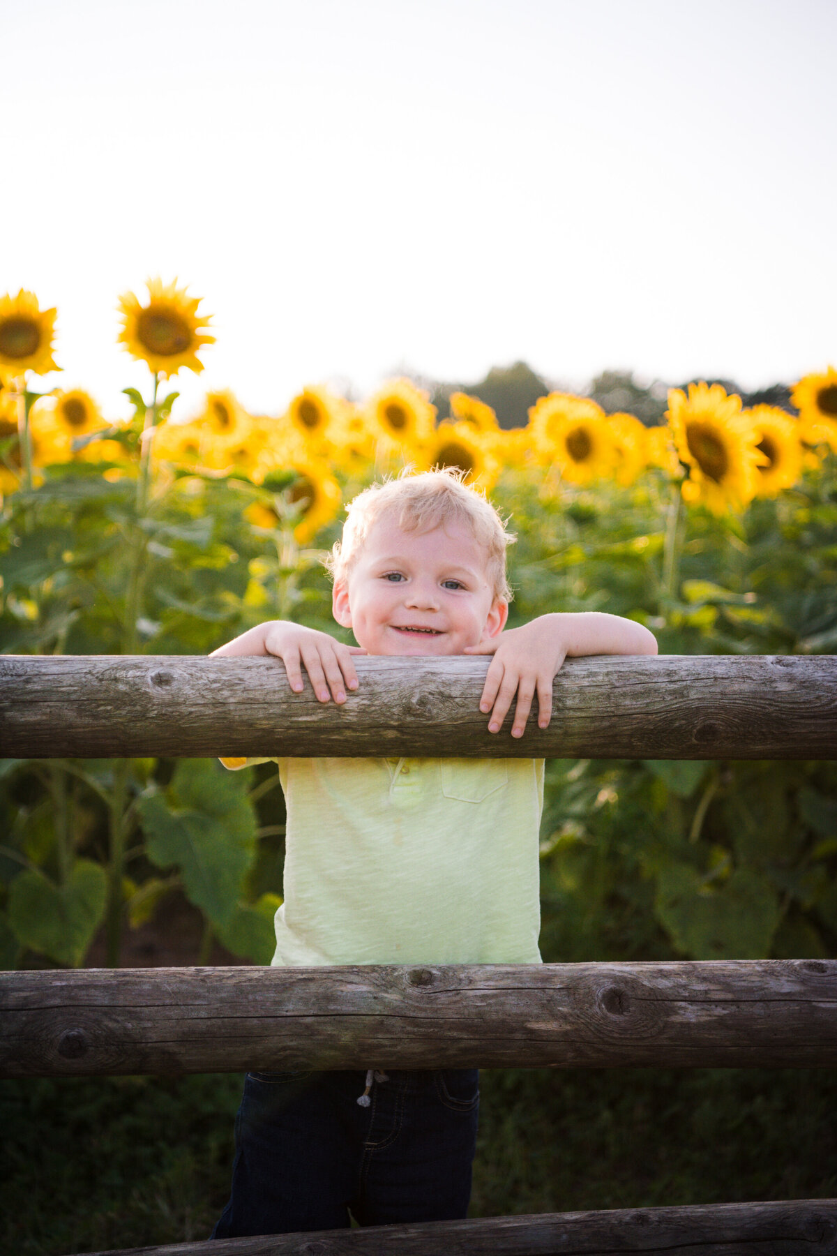 Sunflower family session in Massachusetts