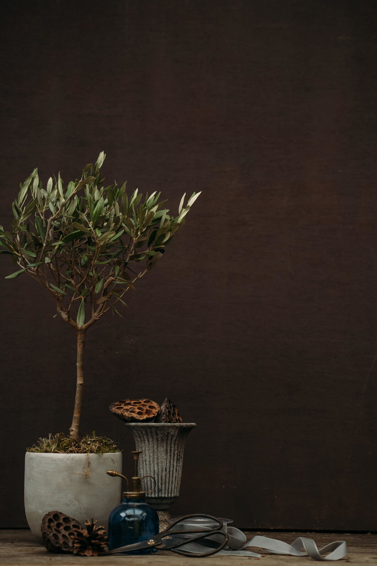 Olive tree. Product photography Leeds