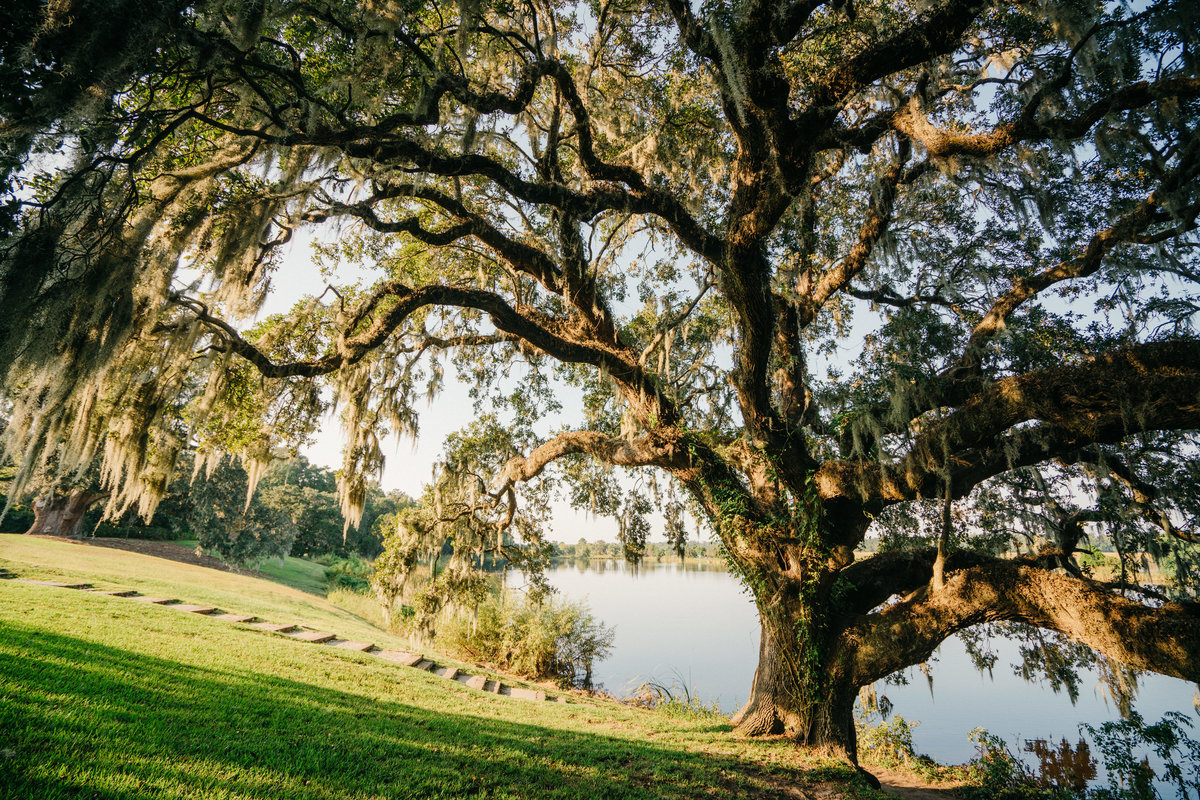 charleston-wedding-venues-middleton-place-philip-casey-photography-005