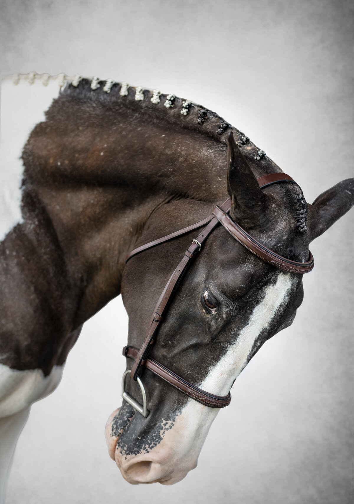 Fine art equine portraits in North Florida with creative backgrounds
