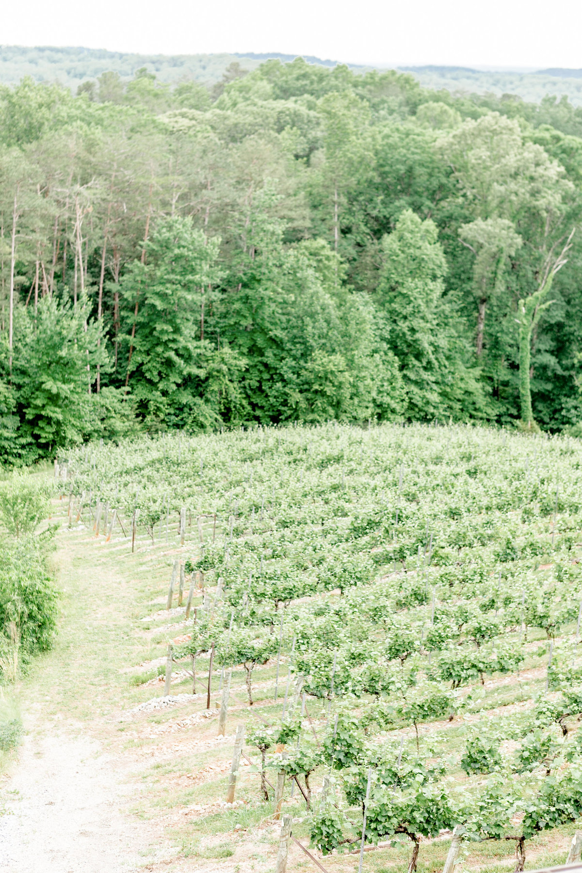 dahlonega-georgia-wedding-mountains-wolf-mountain-winery016