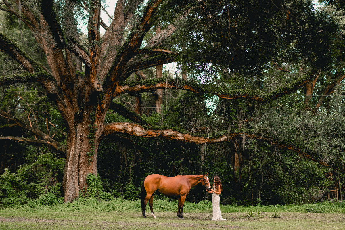 Pretty tree landscape in Gainesville, Florida with horse and rider.