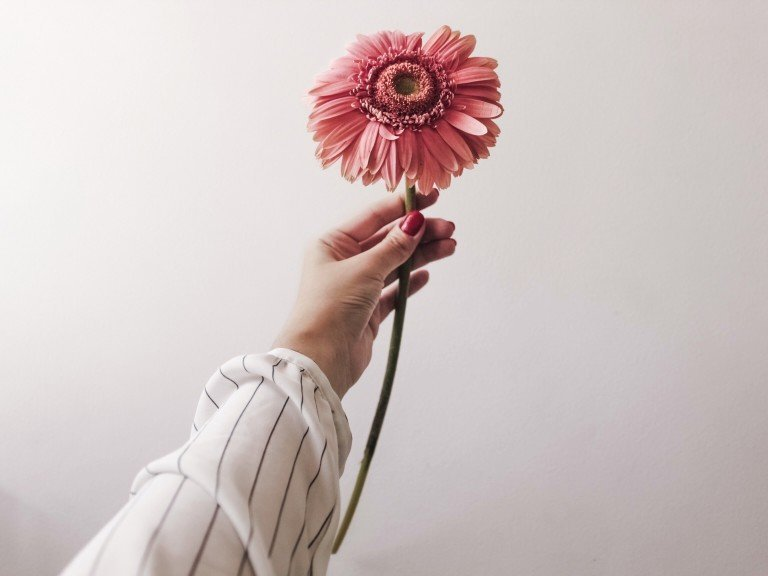 gerbera-flower-in-the-hand-nominated_t20_wQYpRL